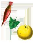 wortel-blad-vrucht